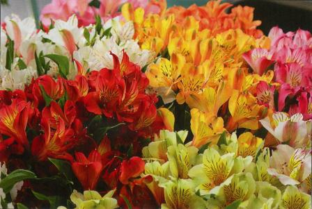 floriculture_Industry_2